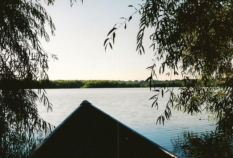 Hiding in the flooded willows-Chautauqua NWR