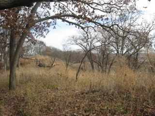 Forest Park South Barrens