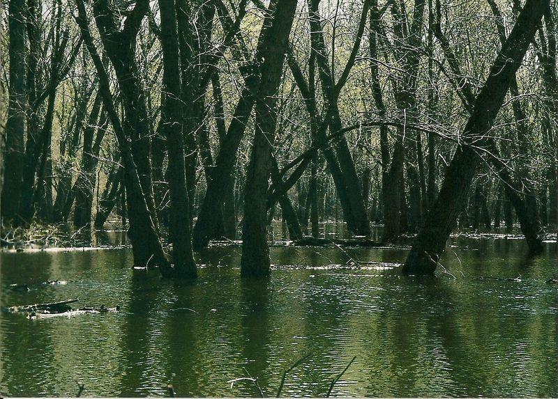 Emiquon NWR-Spoon River bottoms