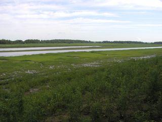 Quiver Creek Seeps1 28-July-2012
