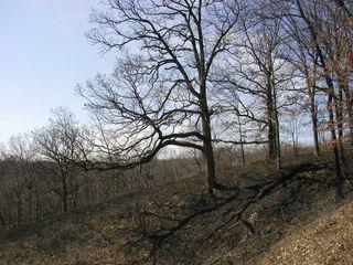 Hopewell HP NP Burn#4 Mar-23-2010