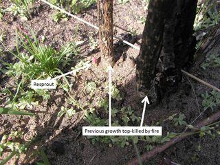 Black walnut April-21-2015 with labels