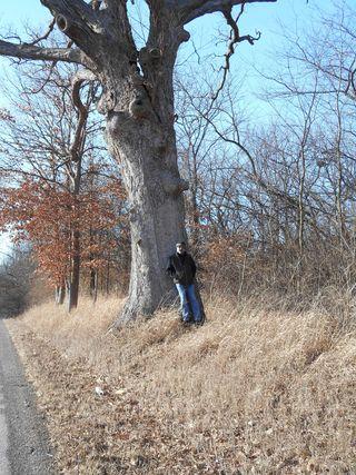 Gudgel Oak Menard County 9-Jan-2014
