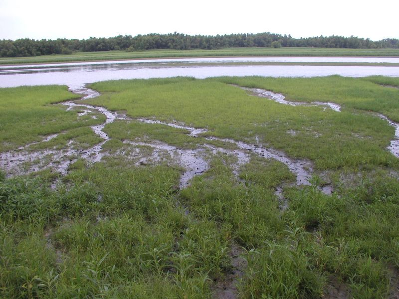 Quiver Creek Seeps2 28-July-2012