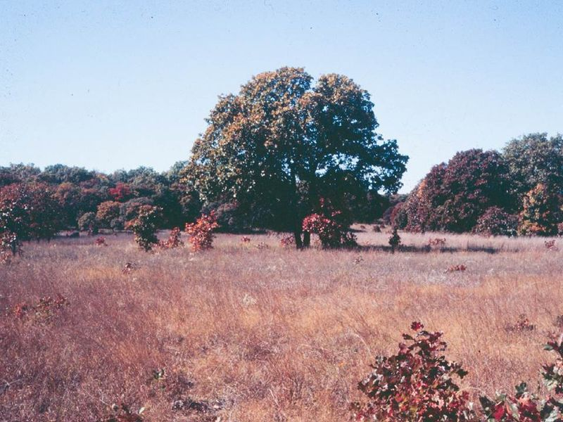 Sand Prairie-Scrub Pak Nature Presevre-early 1990s