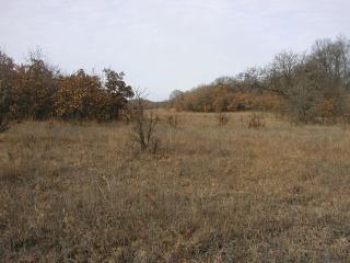 SPSO NP encroaching oaks 2014