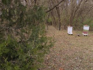 Bee hive opening 20-Nov-2018