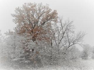 1st snow 9-Nov-2018  big hickory at home