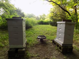 Hives facing east 730 AM 5-June-2019