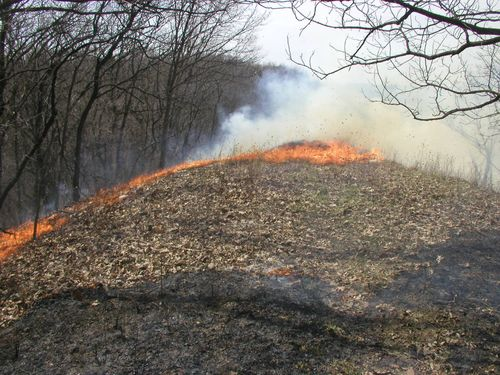 Crevecoeur Nature Preserve Prescribed Fire