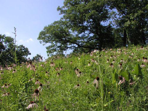 Hopewell Hill Prairies Nature Preserve #1, 17 June 2010
