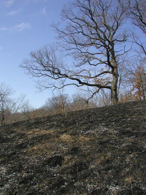 #2 After a Fire