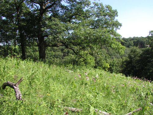 Hopewell Hill Prairies Nature Preserve #2, 17 June 2010