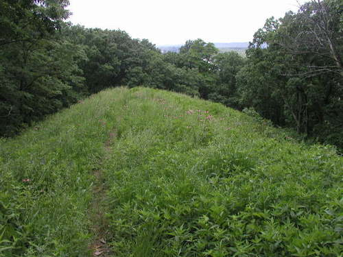 Crevecoeur Hill Prairie
