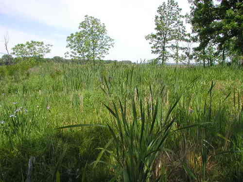 Dore Seep Nature Preserve, May 2008