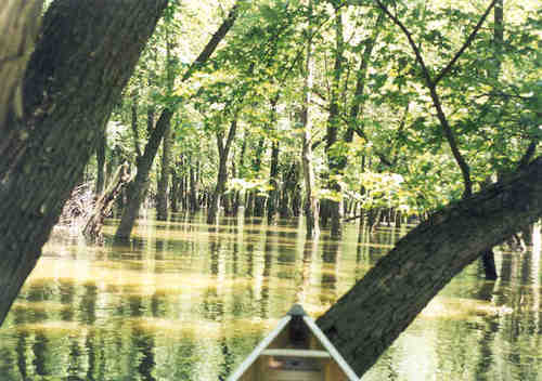 Canoeing a Flooded Forest at Rice Lake